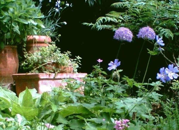 Allium 'Globemaster'3, Blue Hardy Geranium, Lamium, buds of Dianthus 'Mrs Sinkins', 19th May 2011