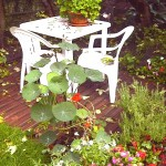 B2 Baytree Corner - Nasturtiums, Geraniums on white table