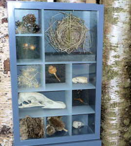 Eco Centre branches, nest, artefacts