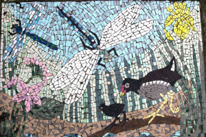 Mosaic Dragonfly Moorhen