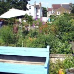 Peckham Wildlife Trust - flower beds
