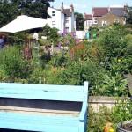 Peckham Wildlife Trust - flower beds
