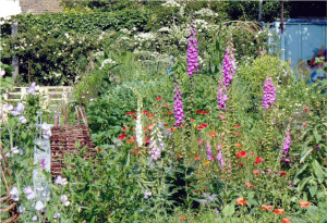 Row 1 No 2 Foxgloves and other flowers