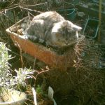 Row 2 No 4 - Chief Inspector Tiggy tests the winter garden