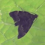 Row 4 No 2 - Mystery Moth