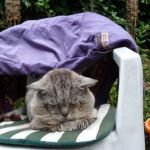 Row 5 No 3 - Tigg dozing under old coat on gdn chair