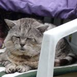 Row 5 No 4 - Tigg closeup, gdn chair and coats, dozing