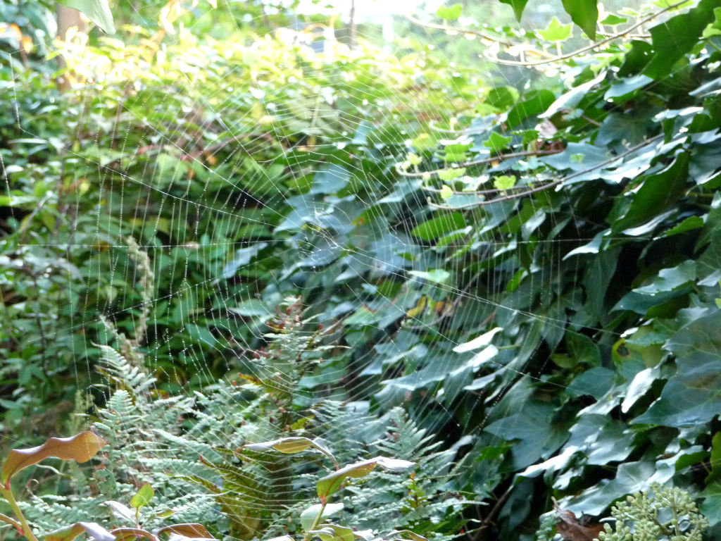 SEPTEMBER SPIDERWEB