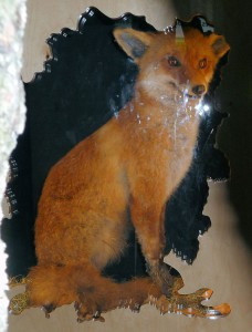 Secret fox, Eco Centre