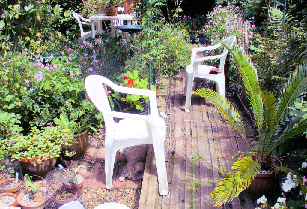 TIGG under chair original, tile path, cycad, plants in pots, lamium, wargrave pink