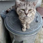 TIGG3 on dustbin