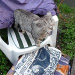 Tigg, gdn chair, best cat pillow thumbnail