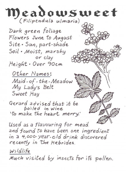 WEBSITE -Meadowsweet crop
