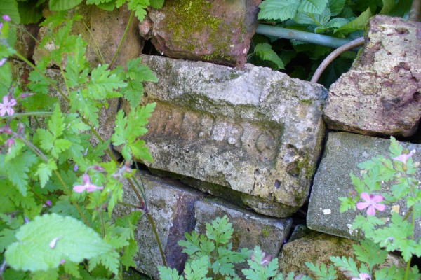 Herb Robert growing round the brick wall