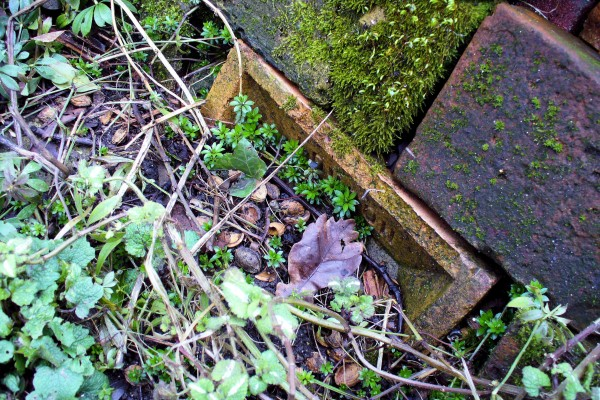 vic bricks, sweet woodruff leaves, moss in spring 2013