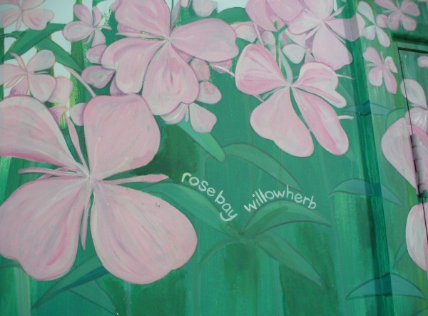 web - tidied interior mural - rosebay willowherb closeup