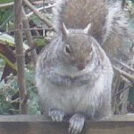 Living with North London Wildlife
