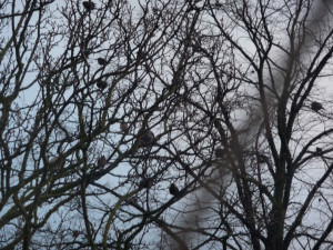 Ash, winter, plump perching birds