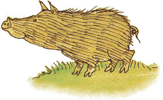 jps-wild-boar2