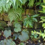 Brick wall, fern bed