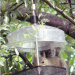 Row 6 No 1 - Squirrel in mealworm feeder.jpg