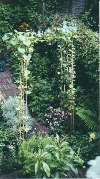 Cane Pergola with Ipomoea Morning Glory 'Heavenly Blue'; garden with Lavender, Avocado, Hardy Geranium 'Wargrave Pink'; Begonia; Rudbeckia