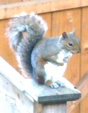 ASquirrel - on postcap