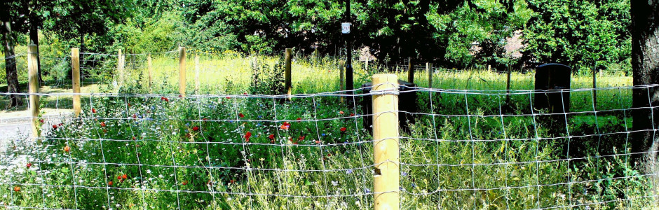 Cornflowers & Poppies, London House Sparrow Parks Project planting, Islington