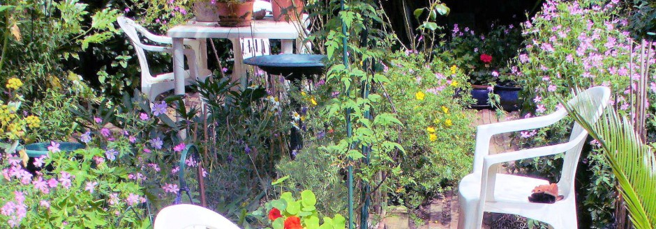 Hardy Geranium Oxonianum 'Wargrave Pink' in RF's garden