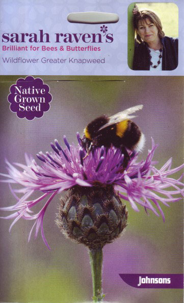 Sarah Raven's Wildflower Seeds – Greater Knapweed