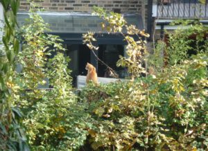 orange-cat-on-plimsoll-shed-2