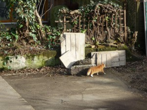 Orange cat walks on devastation