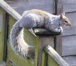 Row 1 No 1 Squirrel sunbathing