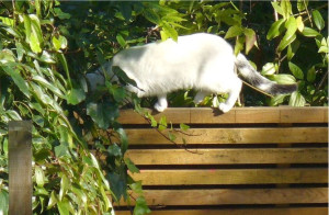 Row 1 No 4 New fence, new cat