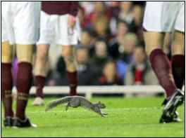 Row 3 No 1 Arsenal players in vintage strip, Highbury Squirrel (media photo)