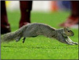 Row 3 No 2 Highbury Squirrel media photo action shot