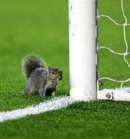 Row 3 No 3 Highbury Squirrel guards post of Jens Lehmann's goal