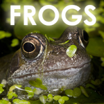 frog-icon
