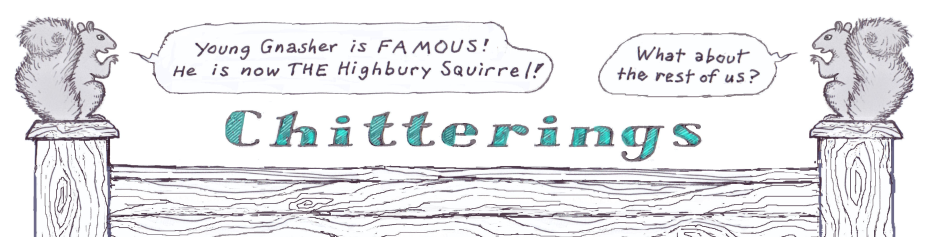 squirrel-chatterings-web
