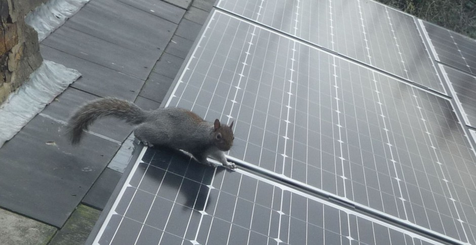 wildlife learns about solar panelling