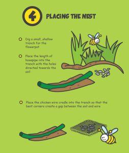 Bee-nesting 4