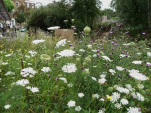gillespie-park-wild-carrot-and-knapweed-front-gates-on-drayton-park-rd